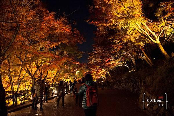 清水寺夜楓-3088.jpg