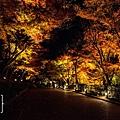 清水寺夜楓-3100.jpg