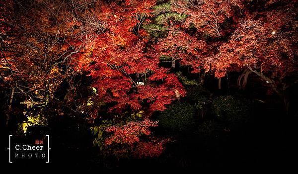 清水寺夜楓-3107.jpg