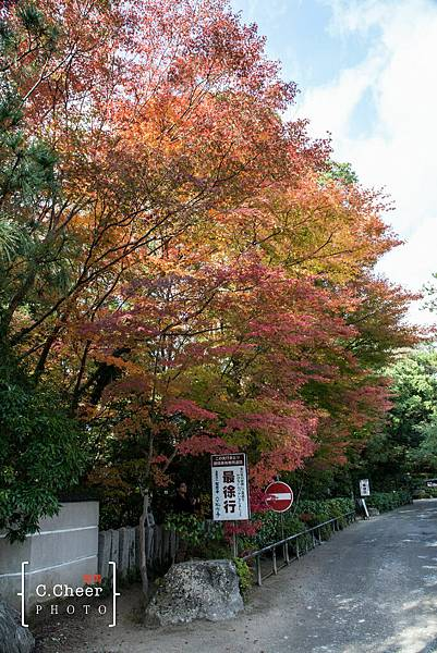 天橋立-2701.jpg