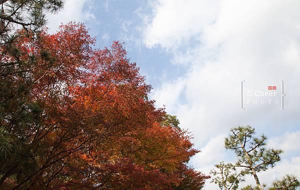 天橋立-2703.jpg