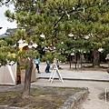 天橋立-2671.jpg