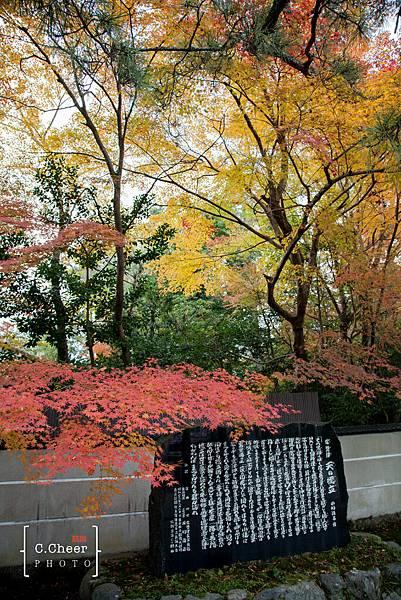 天橋立-2693.jpg
