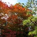 天橋立-2705.jpg