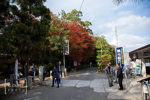 天橋立-2709.jpg