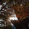 天橋立-2713.jpg