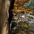 天橋立-2714.jpg