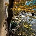 天橋立-2715.jpg