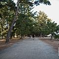 天橋立-2734.jpg
