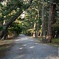 天橋立-2743.jpg