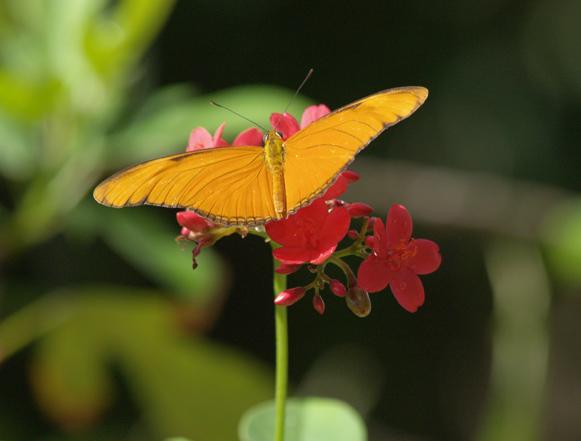 StMaa-Butterfly.jpg