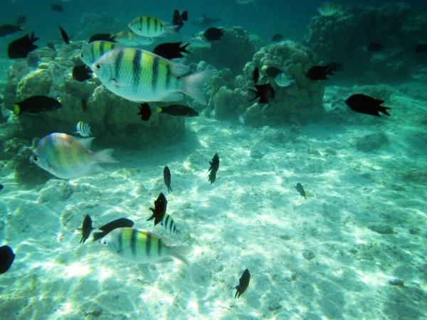 巴拉望豐富海洋生態