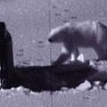 北極熊吃潛艇傳說