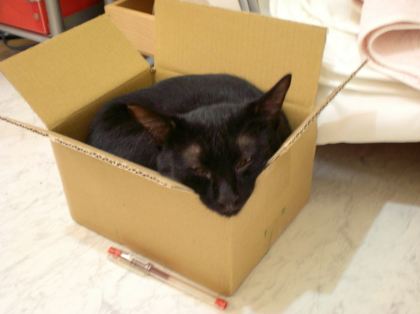 黑貓宅即便