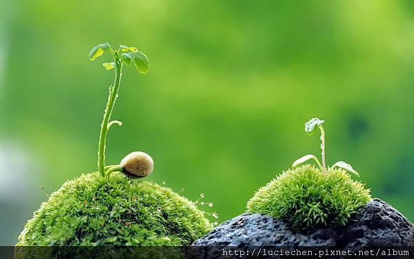 2-beautiful-plant