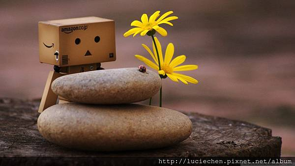 danbo-and-zen-pebbles_00447775