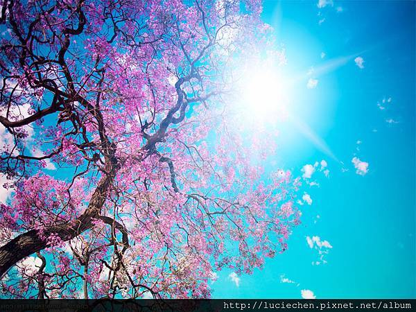 Beautiful-Spring-Sakura-Wall-Paper--e1368500775226
