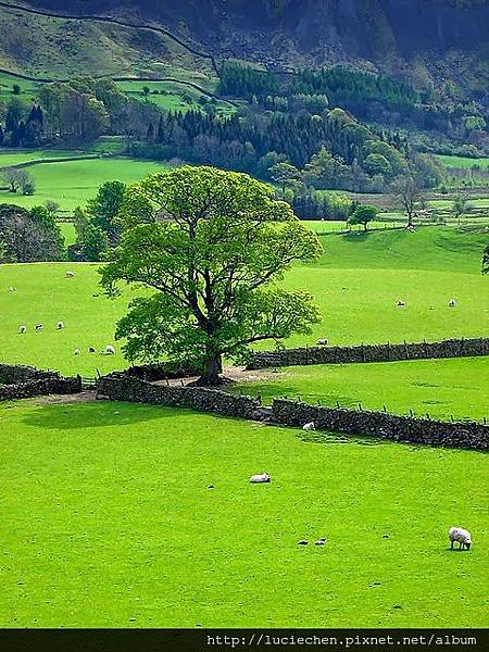 Stone Fence, Mersey, England.jpg