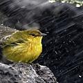 Bird-In-Rain-HD-Wallpaper