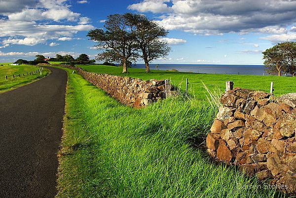 Stone Fence, Yorkshire Dales, England1