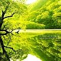 green-tree-lake_1025x768_24541