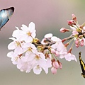 Summer-Flower-152