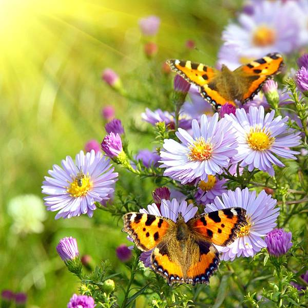 651-butterfly-and-flower-free-ipad-hd-wallpaper_1024x1024