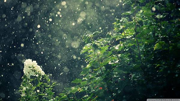 hot_summer_rain-wallpaper-1920x1080
