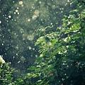 hot_summer_rain-wallpaper-1920x1080
