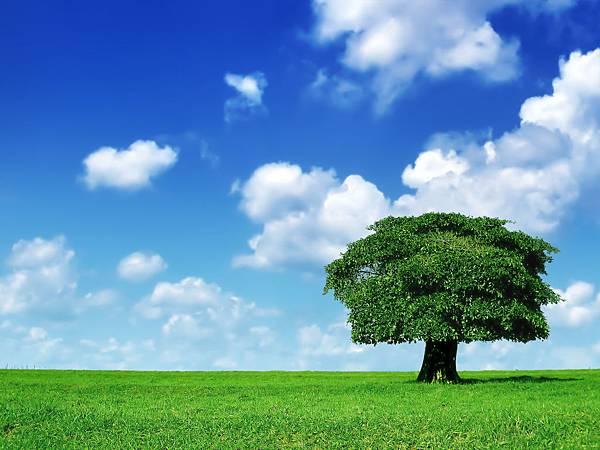 Lone_Tree_1600
