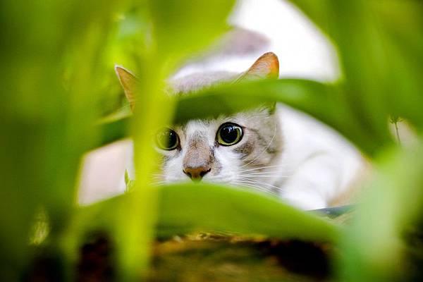 貓隱藏技術-646x970