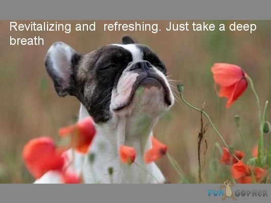Funny-Animals-Revitalizing-and-refreshing-Just-take-a-deep-breath