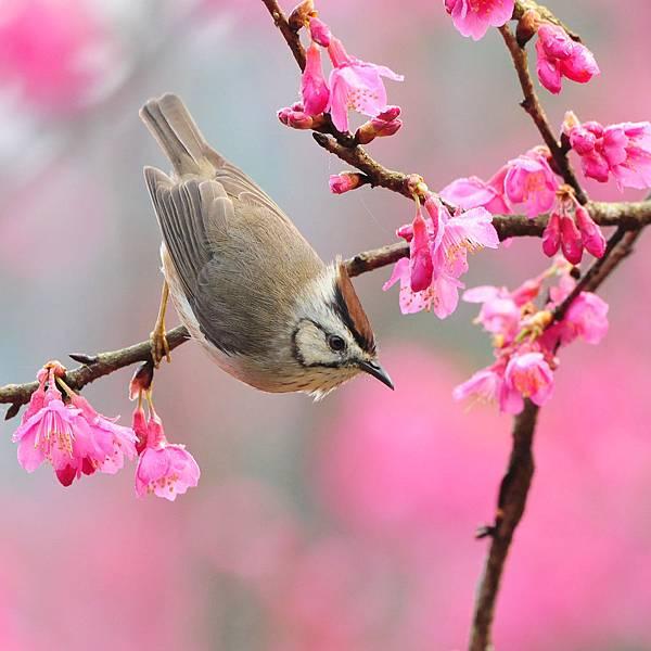 18_spring