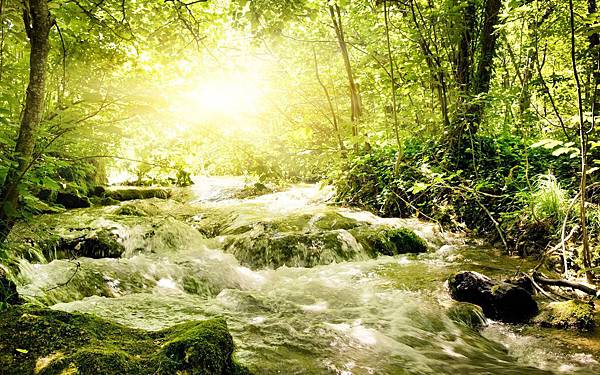 Spring-Stream-Wallpaper-334488