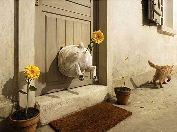 fat_dog_stuck_in_door_embarrassed_by_cat