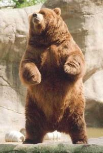 The-Bear-202x300