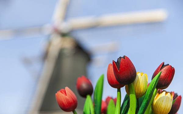windmill-wooden-red-yellow-tulips-hd-wallpaper