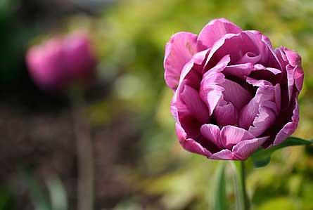 flower-focus-445x299