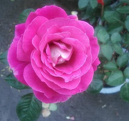 花開富貴0-5.jpg
