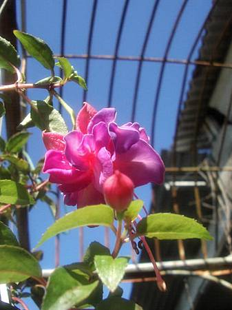花開富貴1.jpg