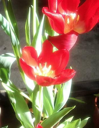 花開富貴3.jpg