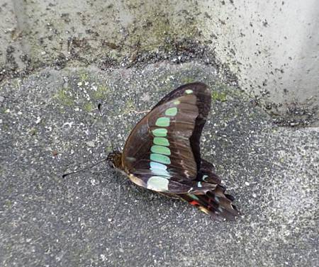 蛹的奇蹟5