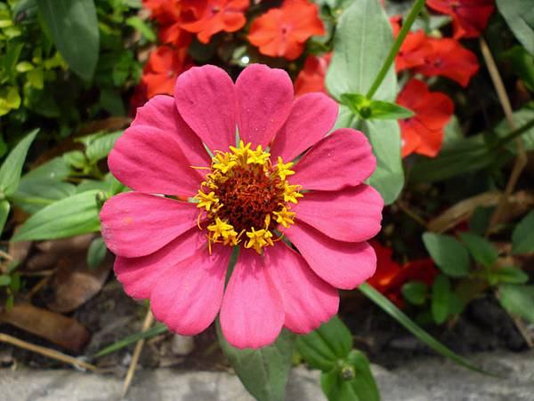 2014  紅花