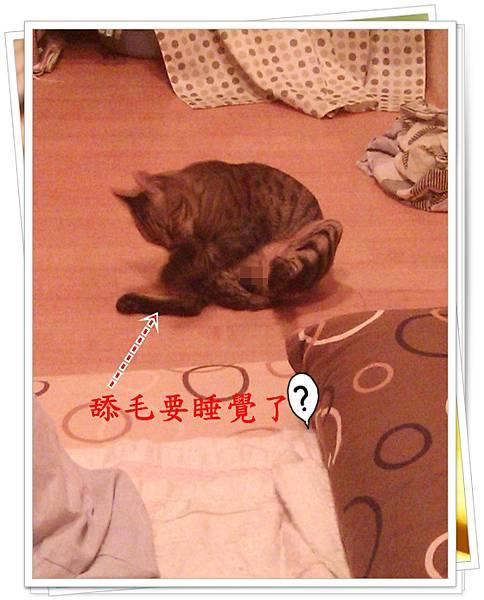 IMAG0851.jpg
