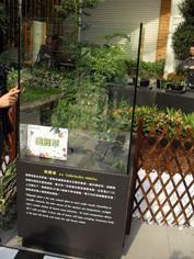 彩繪藝術_2010臺北國際花卉博覽會_未來館內的跳舞草.JPG