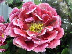 彩繪藝術_2010臺北國際花卉博覽會_未來館的永生花.JPG