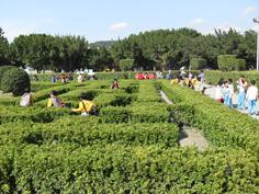 彩繪藝術_2010臺北國際花卉博覽會_迷宮花園.JPG