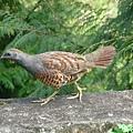 肥肥bird.JPG