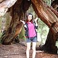 我被神木包圍了