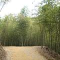 很美的竹山竹林